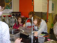 Elementary science students working in the Robert and Mary Ellen Stevens Laboratory - click for larger image